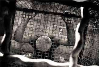 Cadeia ou jaula: uma análise superficial das cadeias no país