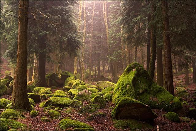 Das Ruas à Floresta, da Floresta às Ruas