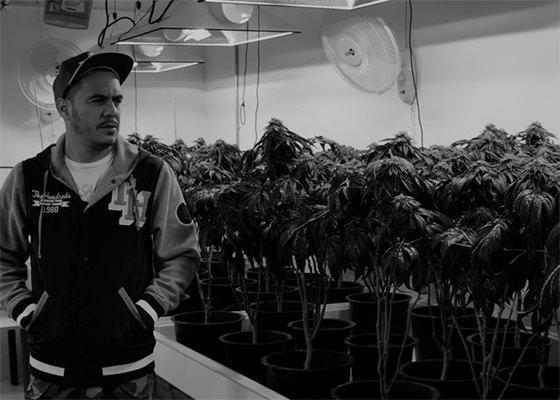Marcelo D2 em um growroom de maconha